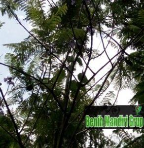 Jual Bibit Tanaman Jakarta Harga Grosir
